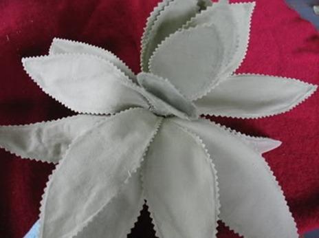 tayra-2010-02-26_130017