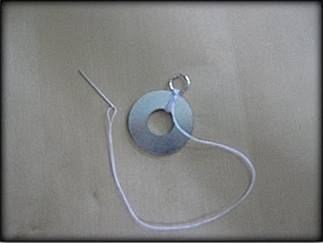 tayra-2010-06-11_113606