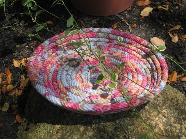 tayra-2010-08-18_121640