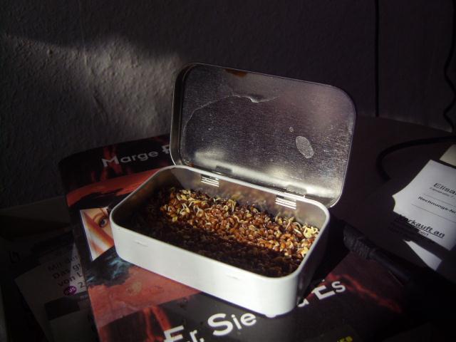 Мини-сад в коробке из-под олова