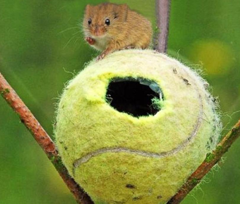 Теннисные мячики (20)