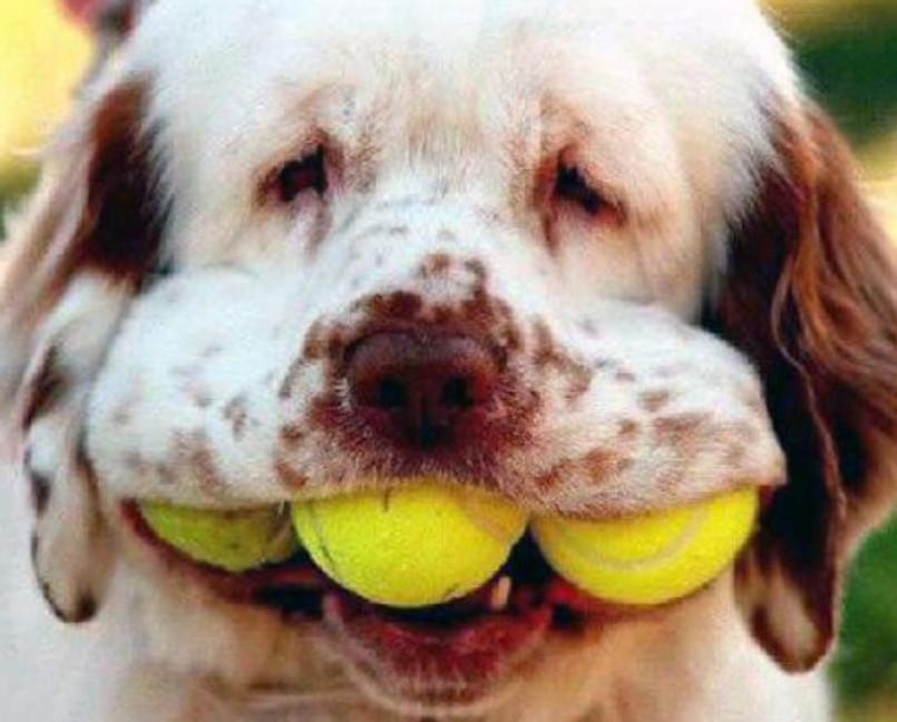 Теннисные мячики (19)