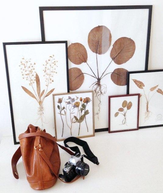Красивые фото из гербария