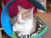 Авангардный домик для кошки